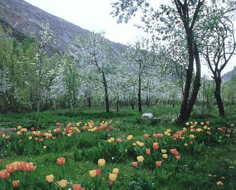 Iran, paysage du Nord